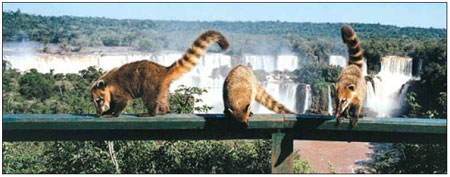 coatis and falls