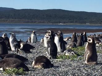 Penguins on Mortilla Island