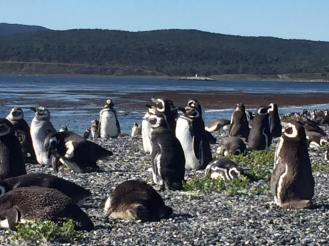 Penguins on Mortilla Island