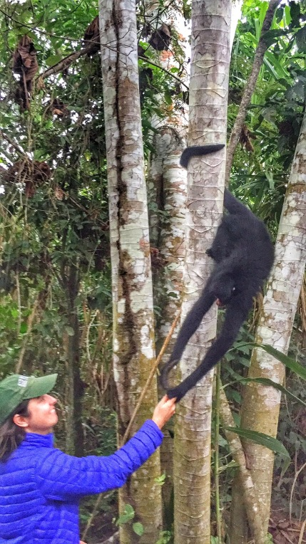 Spider monkey finds his banana in Dee's hand