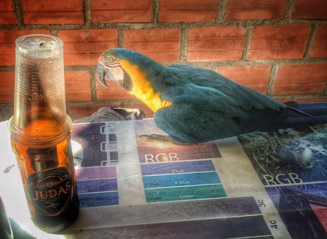 Parrot comes to meet us with a beer