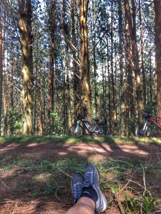 Lunch time in the pine forest