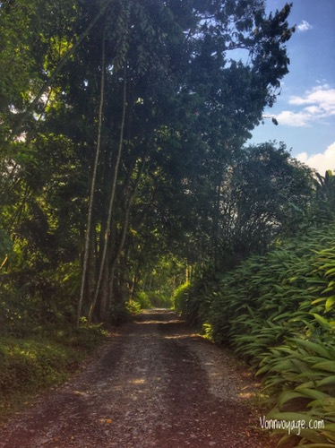 The shaded roads throughout the finca