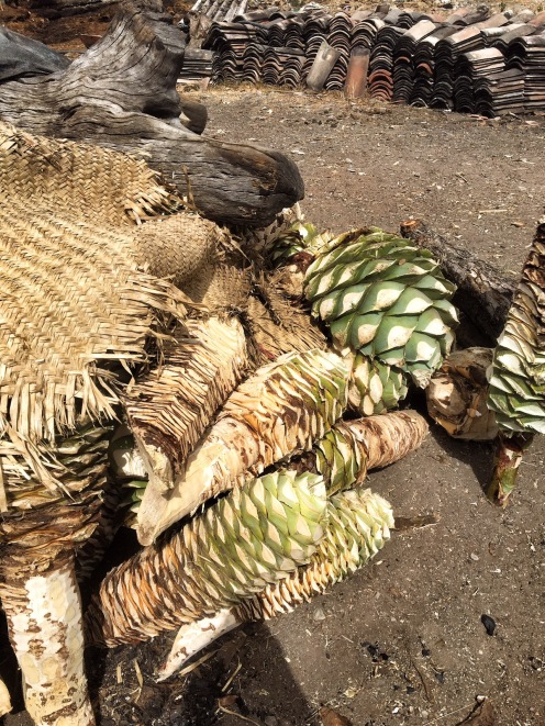 The husks from the agave plants